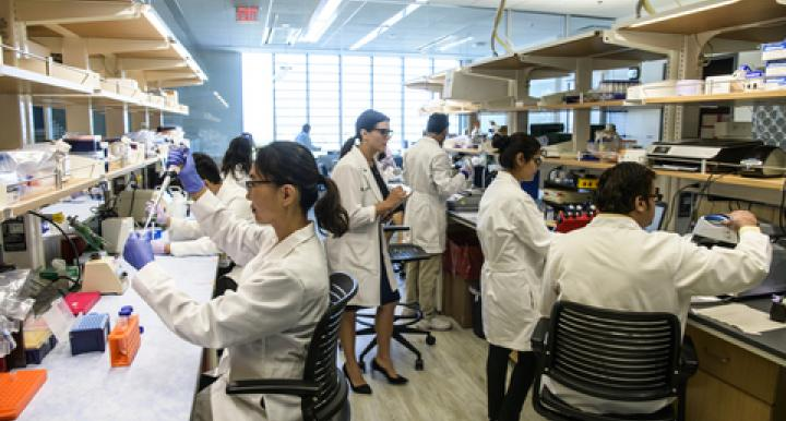 At work in the Hecker Lab. From left: Sunny Palumbo, Louise Hecker, Reena Chawla, and Gajanan Inamdar (Photo: Kris Hanning/UAHS Biocommunications)